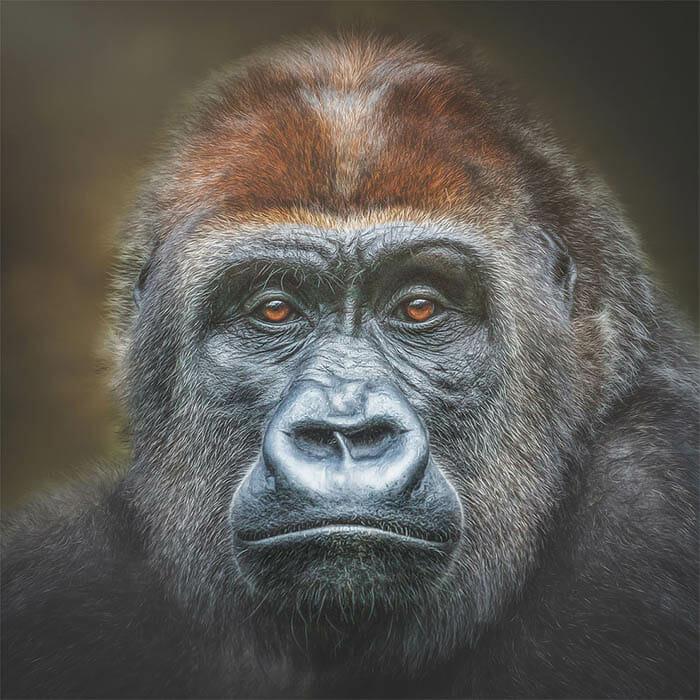 similaridade-expressoes-macacos_10