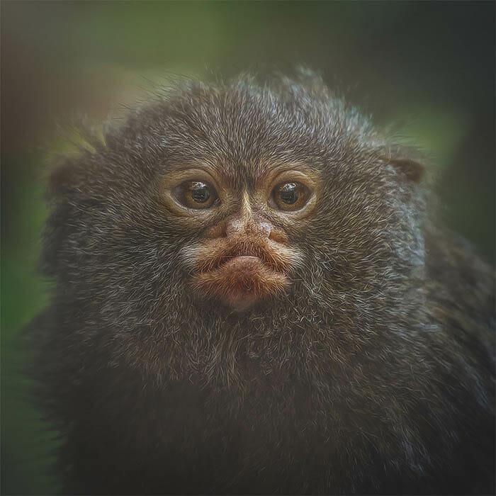similaridade-expressoes-macacos_11