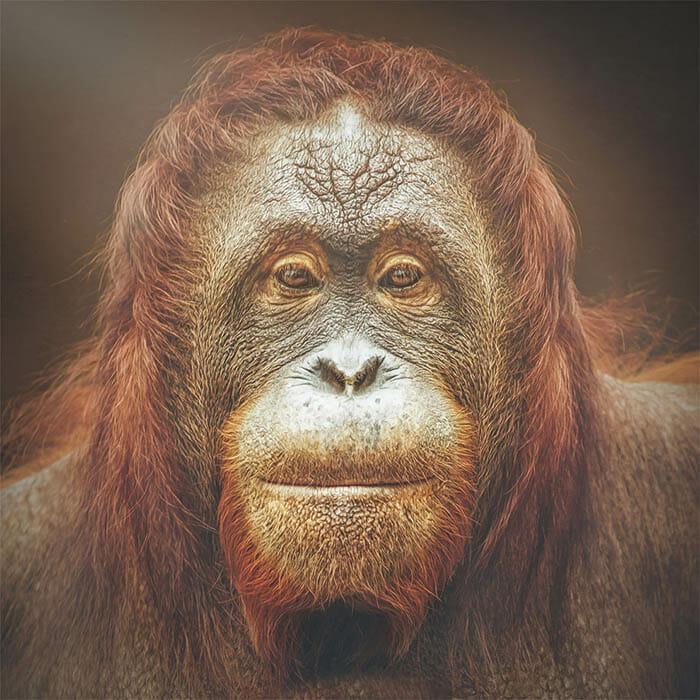 similaridade-expressoes-macacos_12
