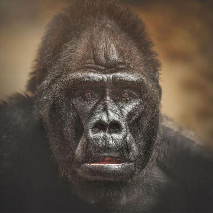 similaridade-expressoes-macacos_13