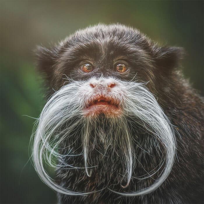 similaridade-expressoes-macacos_2