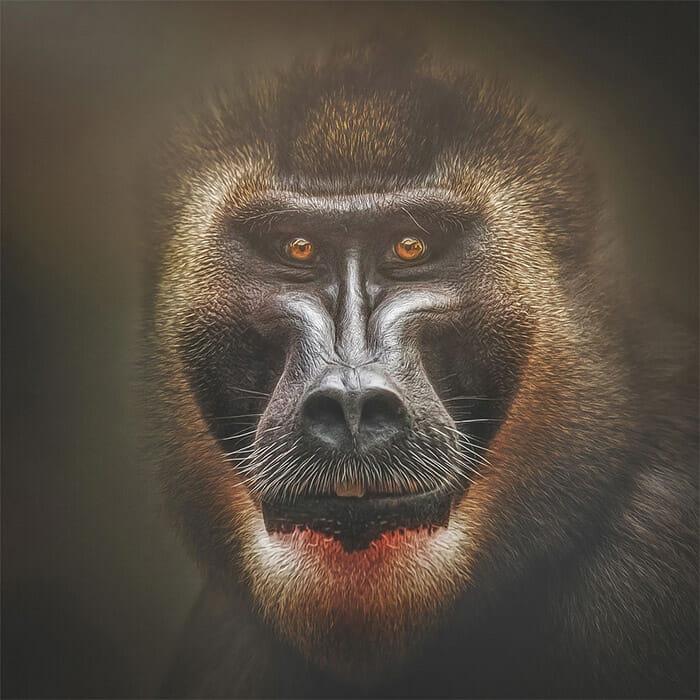similaridade-expressoes-macacos_3