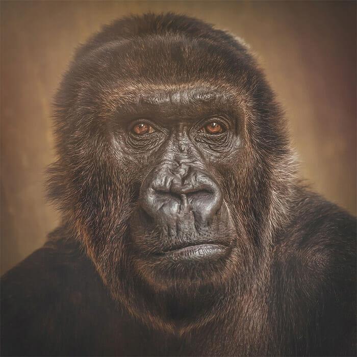 similaridade-expressoes-macacos_4