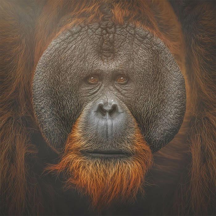 similaridade-expressoes-macacos_5