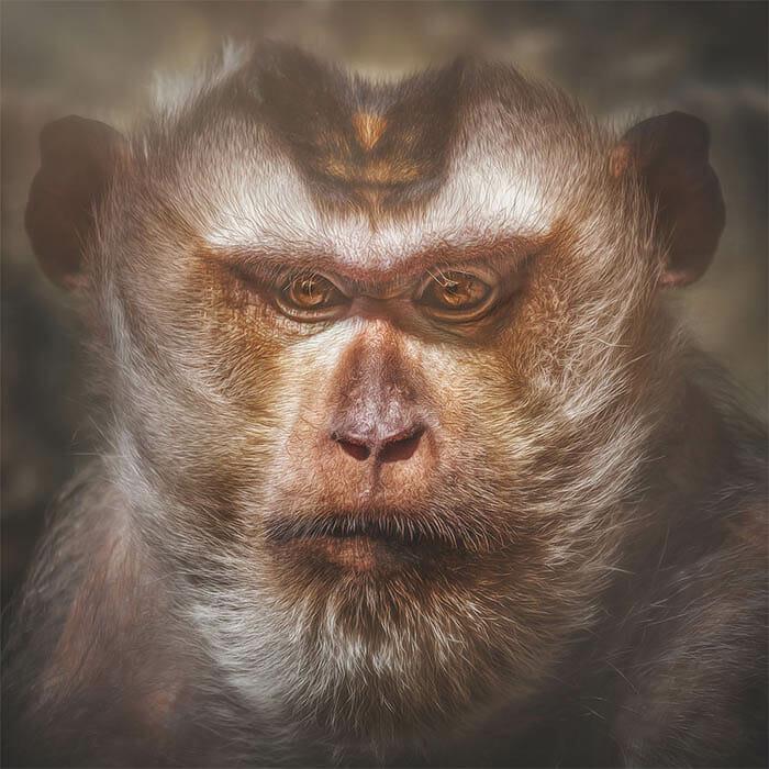similaridade-expressoes-macacos_6