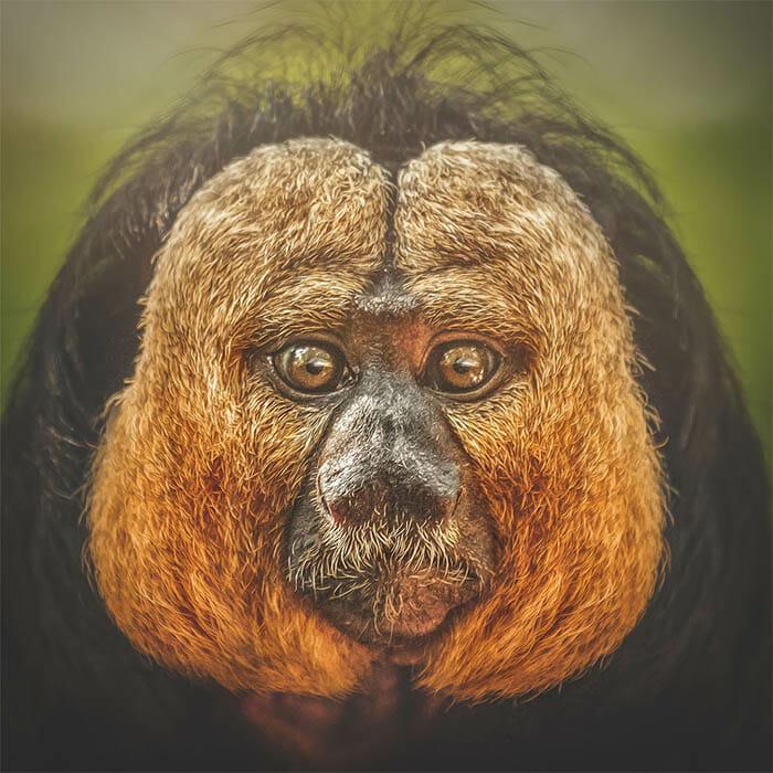 similaridade-expressoes-macacos_7