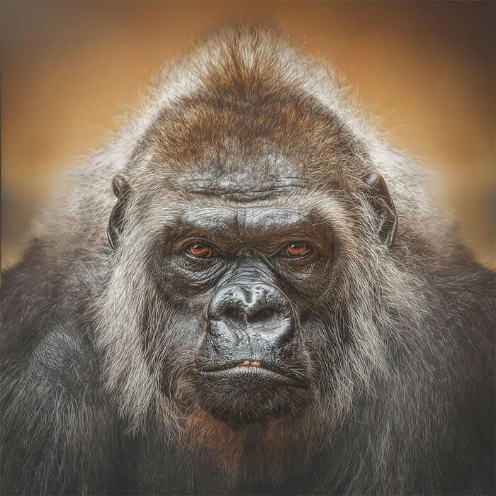 similaridade-expressoes-macacos_8