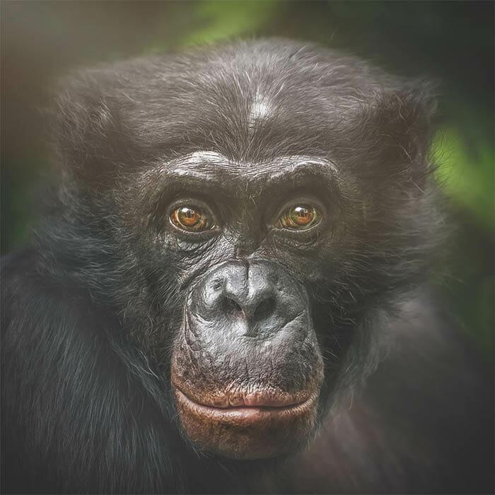 similaridade-expressoes-macacos_9