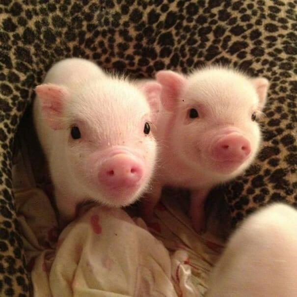 animais-sorridentes_1