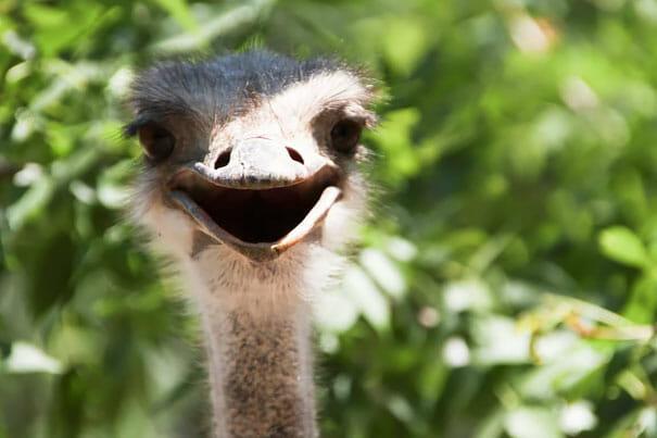 animais-sorridentes_11