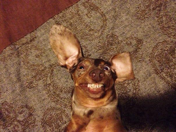 animais-sorridentes_12