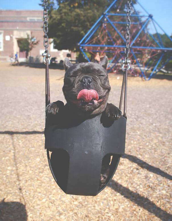 animais-sorridentes_13