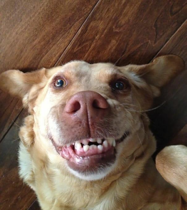 animais-sorridentes_14