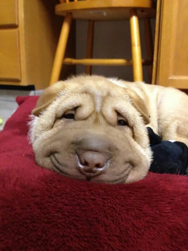 animais-sorridentes_19