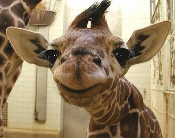 animais-sorridentes_24