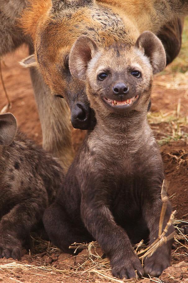 animais-sorridentes_26