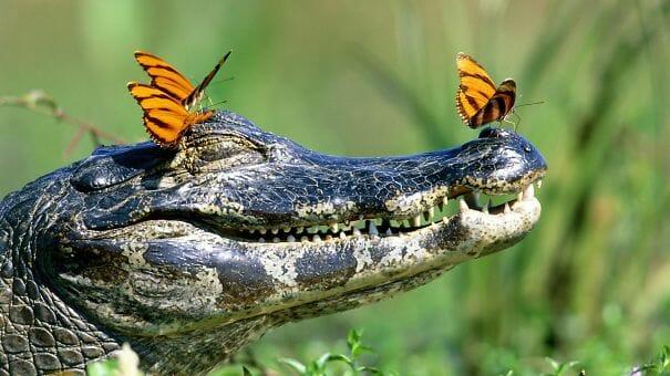 animais-sorridentes_3