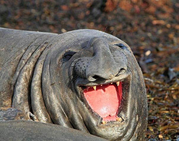 animais-sorridentes_6