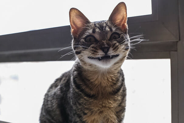 animais-sorridentes_8