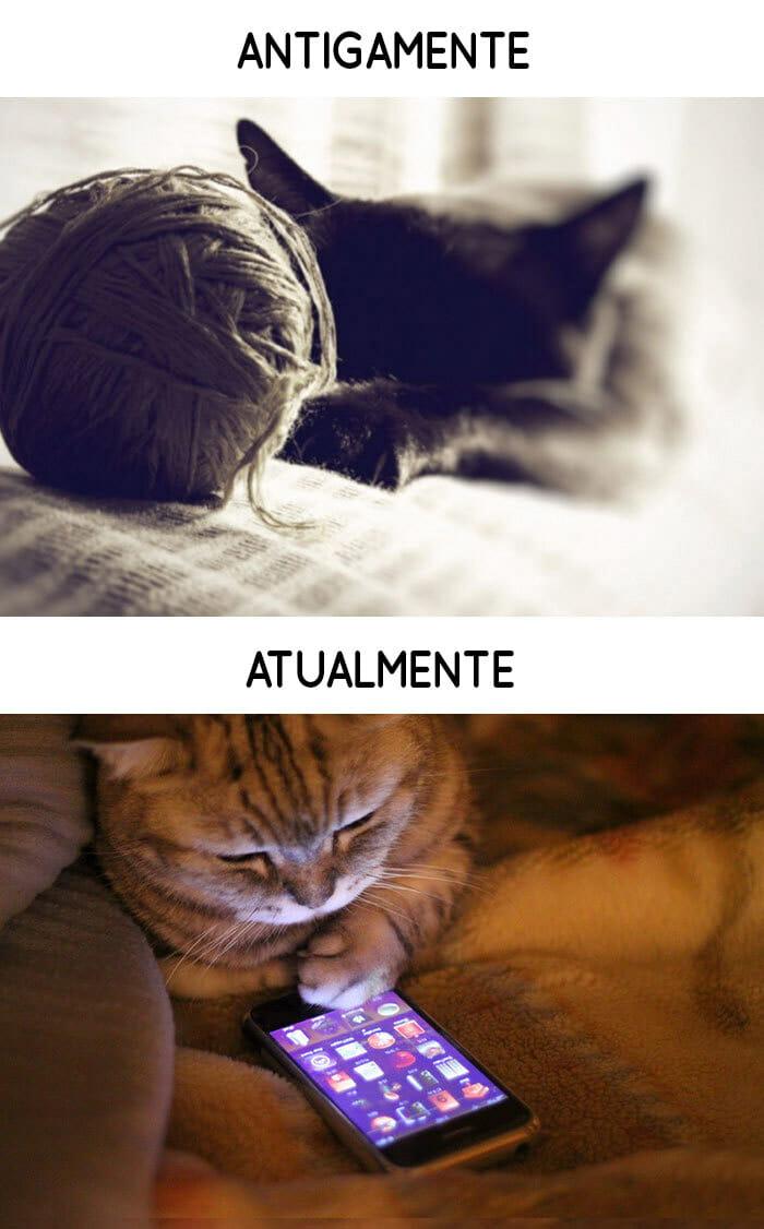 antigamente-vs-atualmente-gatos_10