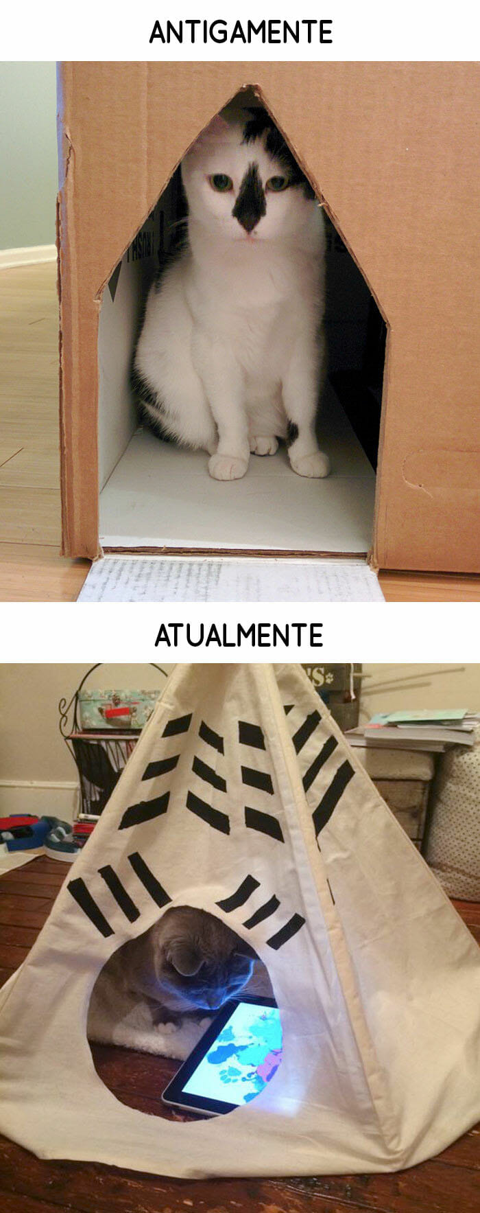 antigamente-vs-atualmente-gatos_12