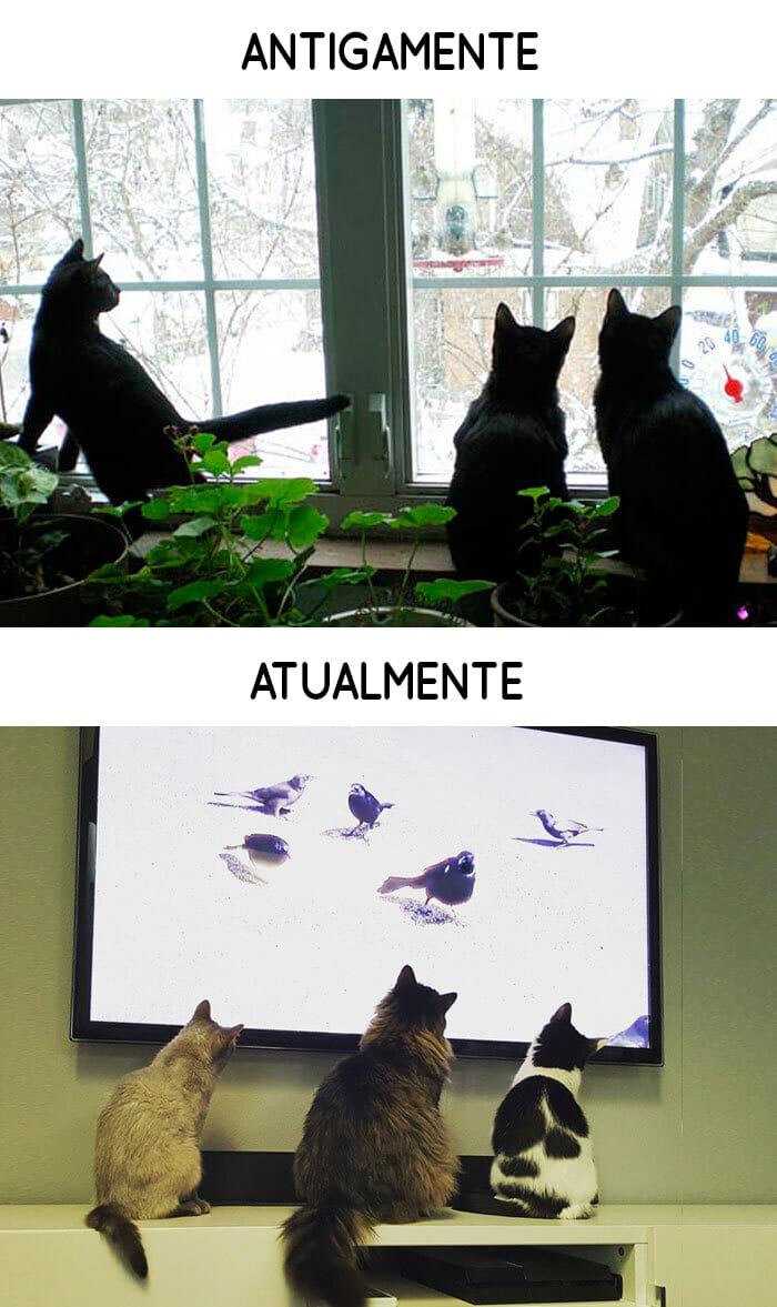 antigamente-vs-atualmente-gatos_13
