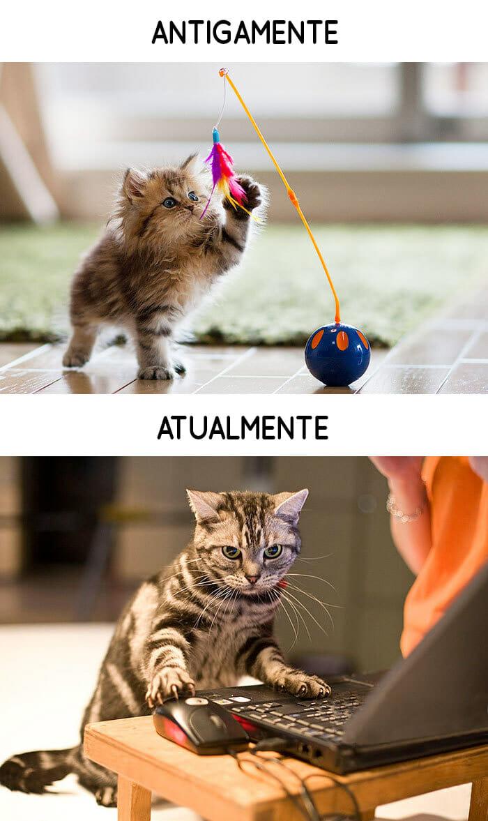 antigamente-vs-atualmente-gatos_14