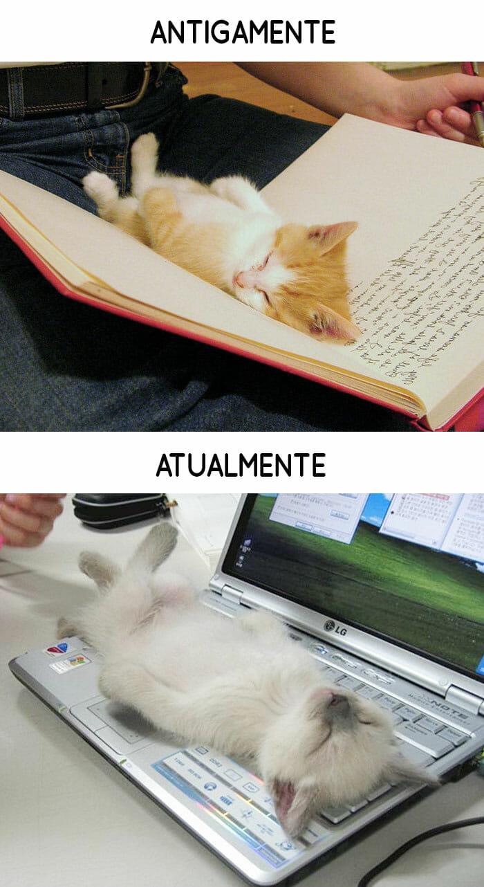 antigamente-vs-atualmente-gatos_2