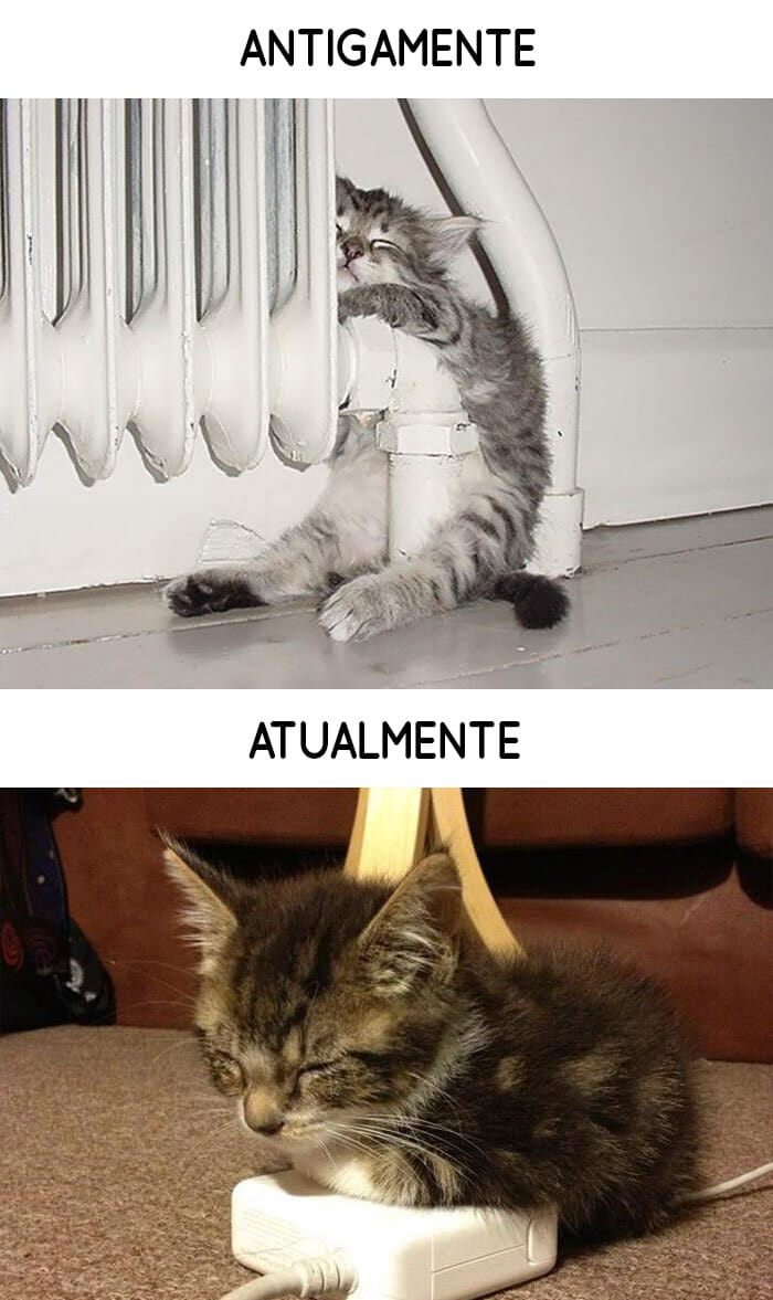 antigamente-vs-atualmente-gatos_3