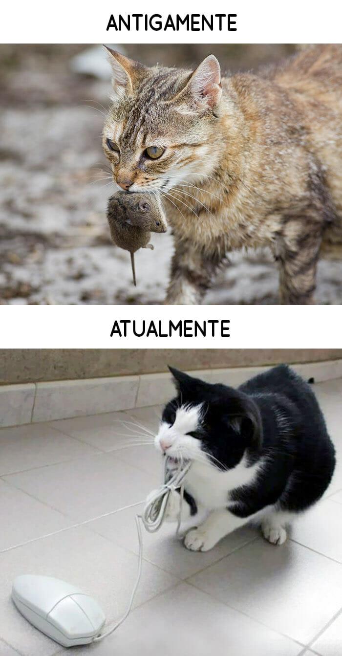 antigamente-vs-atualmente-gatos_4