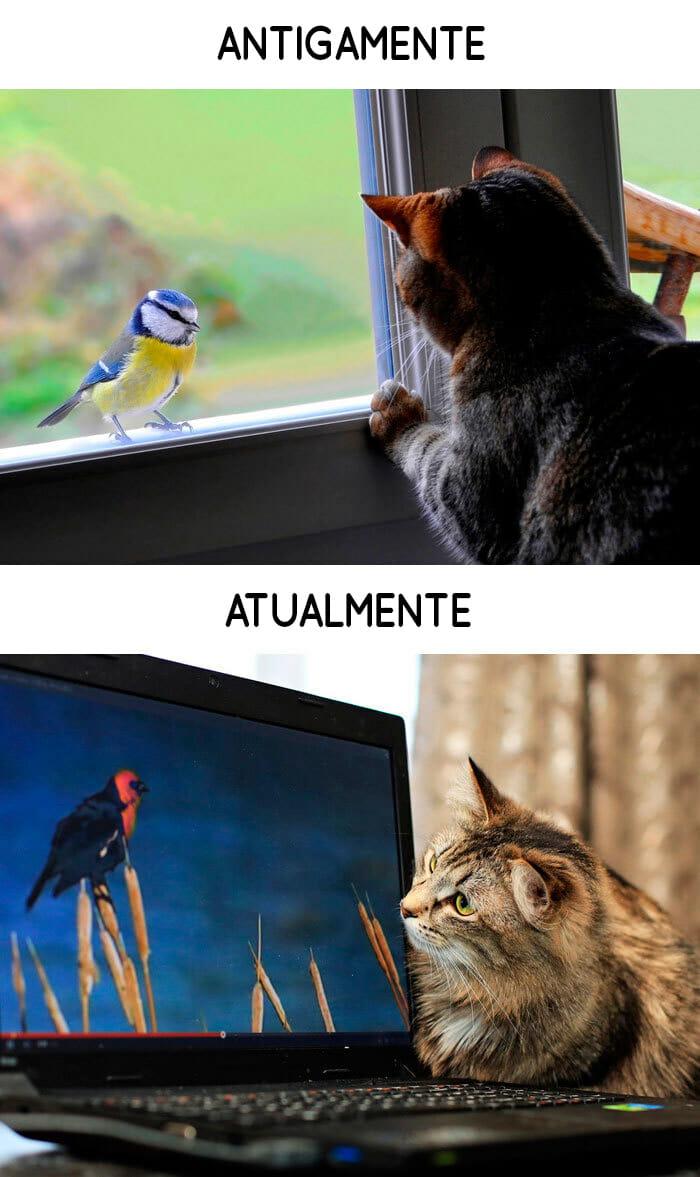 antigamente-vs-atualmente-gatos_5