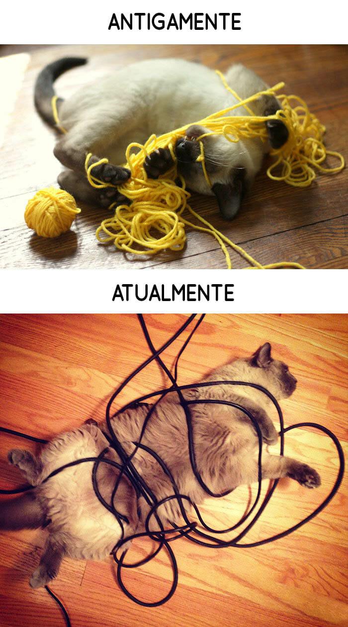 antigamente-vs-atualmente-gatos_6