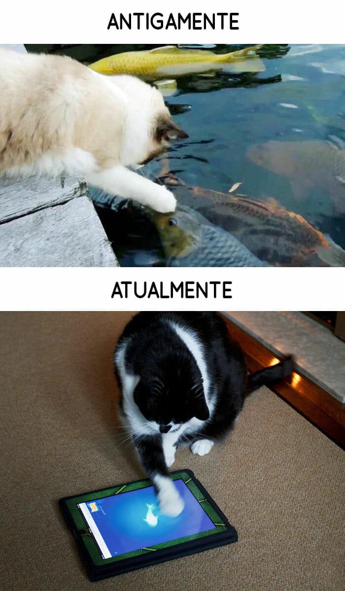 antigamente-vs-atualmente-gatos_7