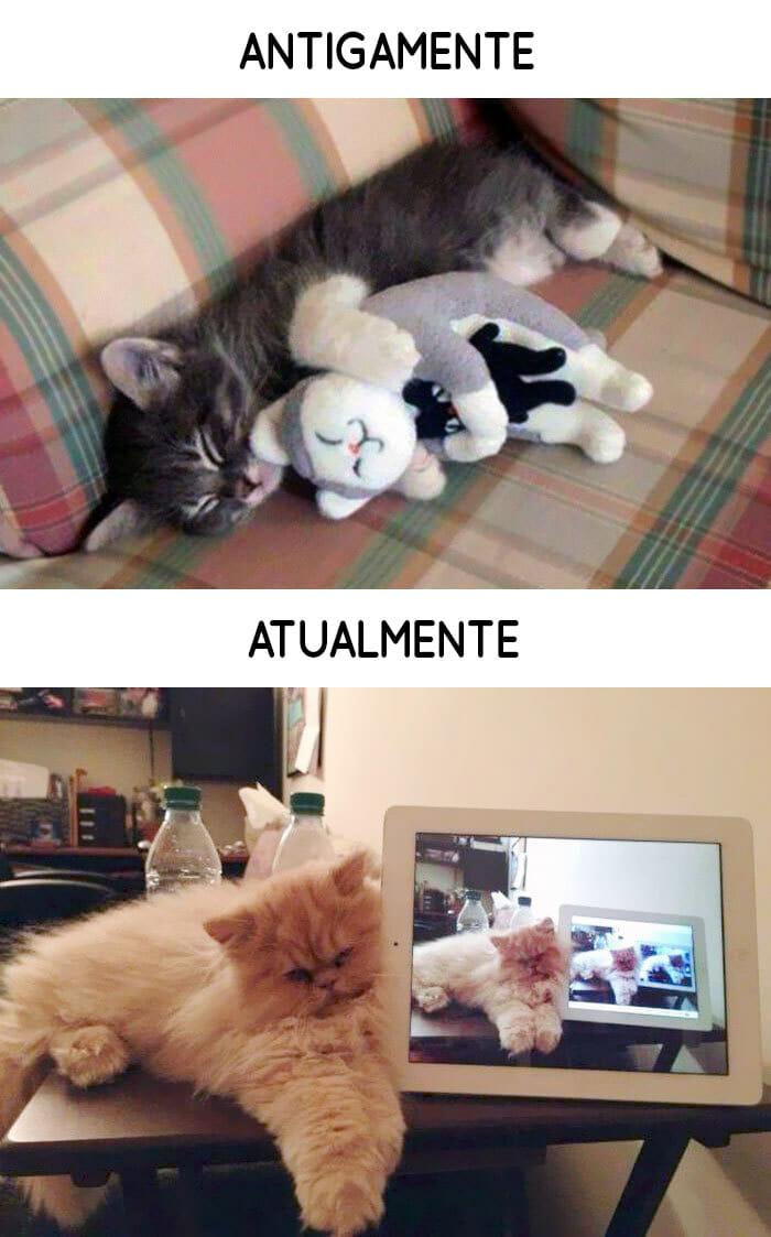 antigamente-vs-atualmente-gatos_8