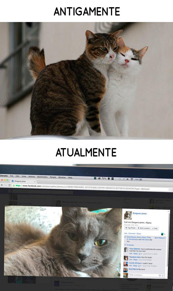 antigamente-vs-atualmente-gatos_9