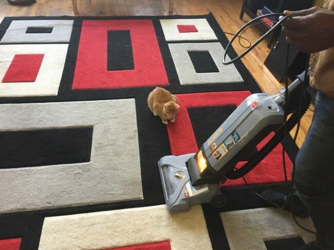 aprendendo-com-animais-espertos_22
