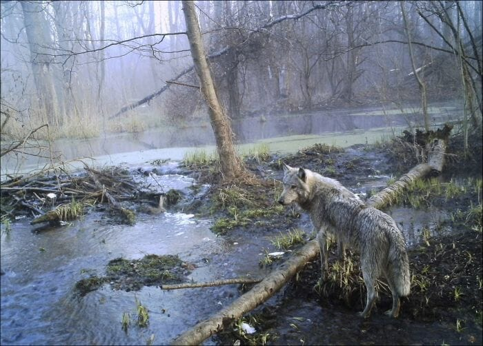 chernobyl-atualmente_1