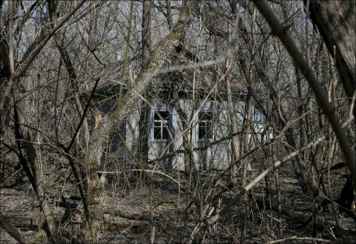 chernobyl-atualmente_6