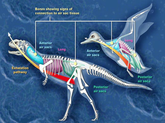 mitos-sobre-dinossauros_18