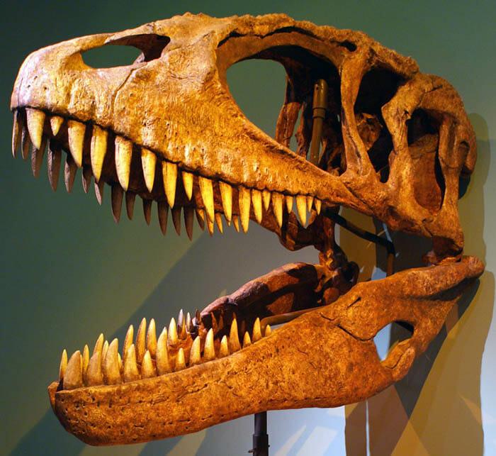 mitos-sobre-dinossauros_8
