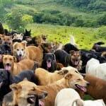 Bem vindo à Terra dos Perdidos: Um paraíso para cachorros abandonados na Costa Rica