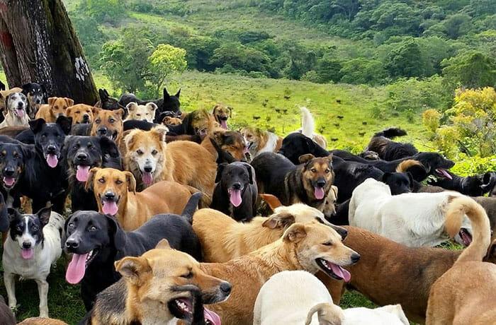 paraiso-dos-cachorros-perdidos