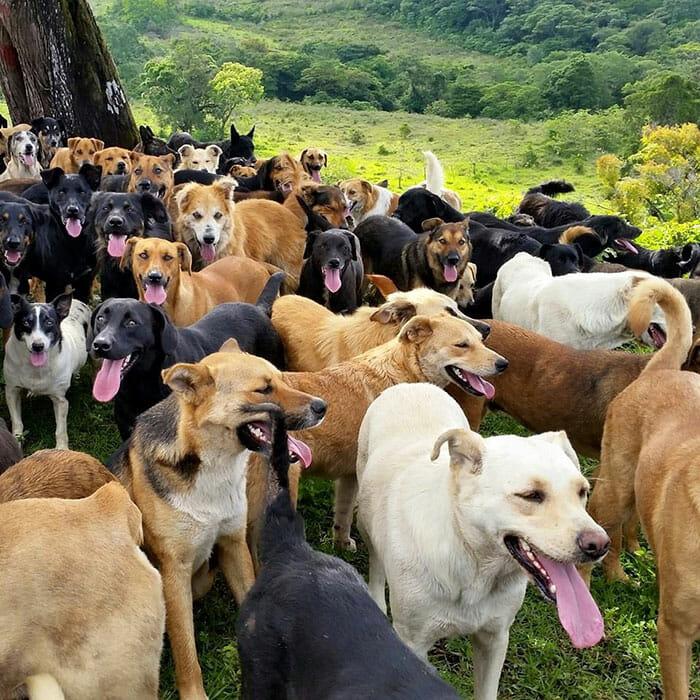 paraiso-dos-cachorros-perdidos_4