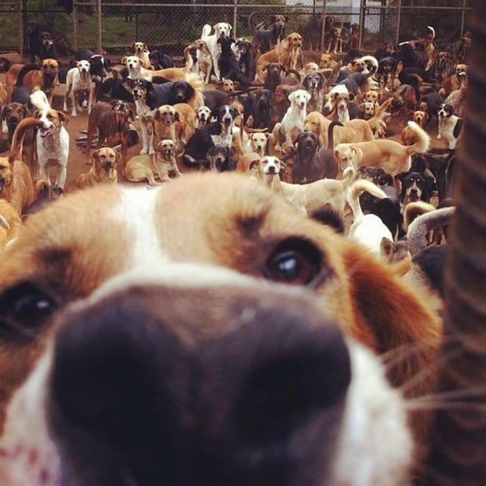 paraiso-dos-cachorros-perdidos_7
