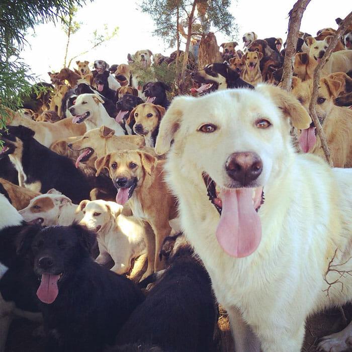 paraiso-dos-cachorros-perdidos_9
