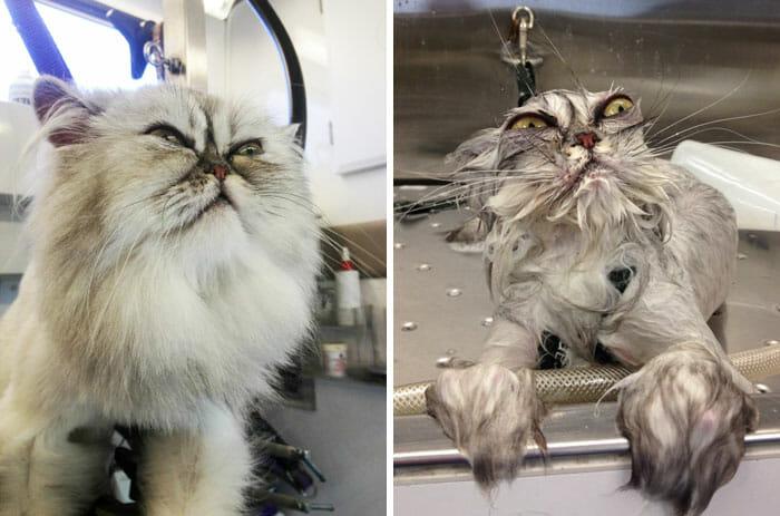 animais-antes-depois-do-banho