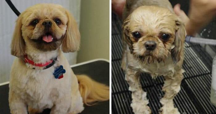 animais-antes-depois-do-banho_1