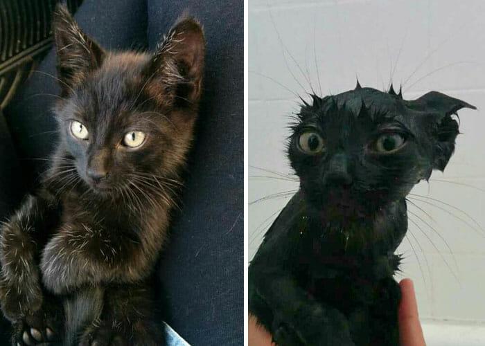 animais-antes-depois-do-banho_11