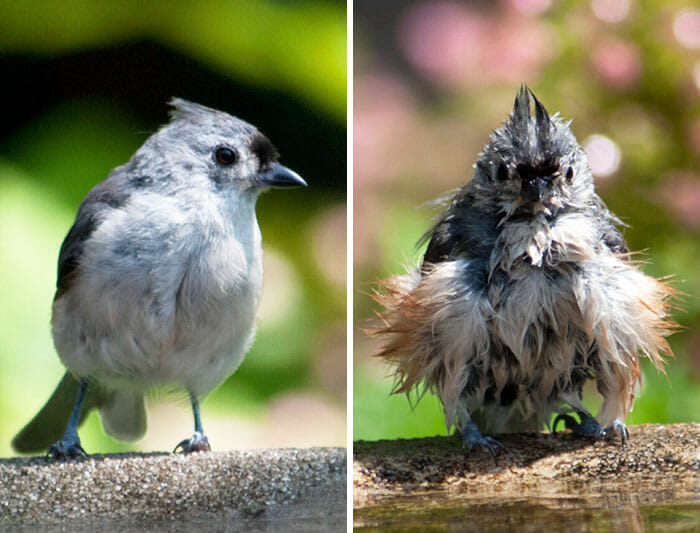 animais-antes-depois-do-banho_12
