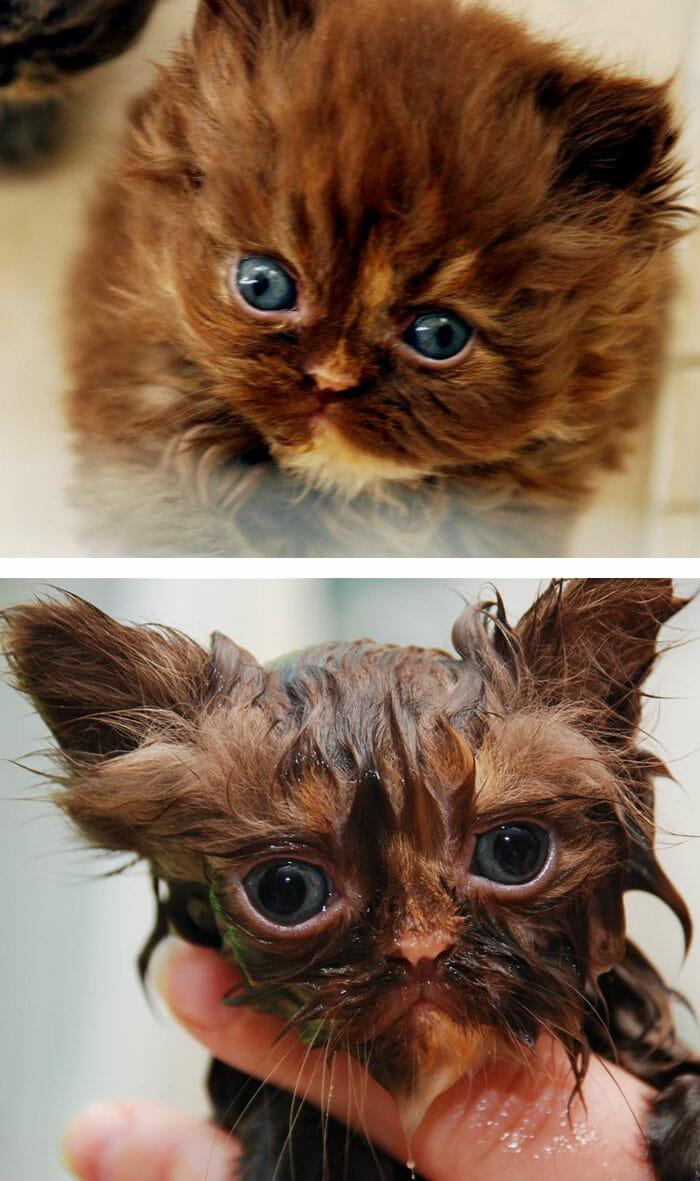 animais-antes-depois-do-banho_16